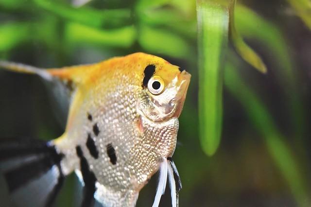 Cambio de agua en el acuario: conoce su importancia