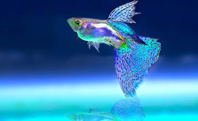 Cómo bajar el pH del acuario o subirlo fácilmente